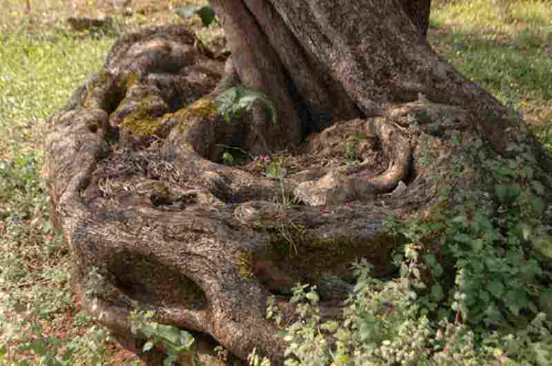 Ελιά Λάκκου – Σαμωνά Αρμένων